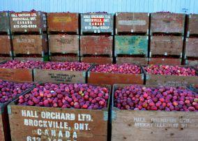 Hall's Apple Market
