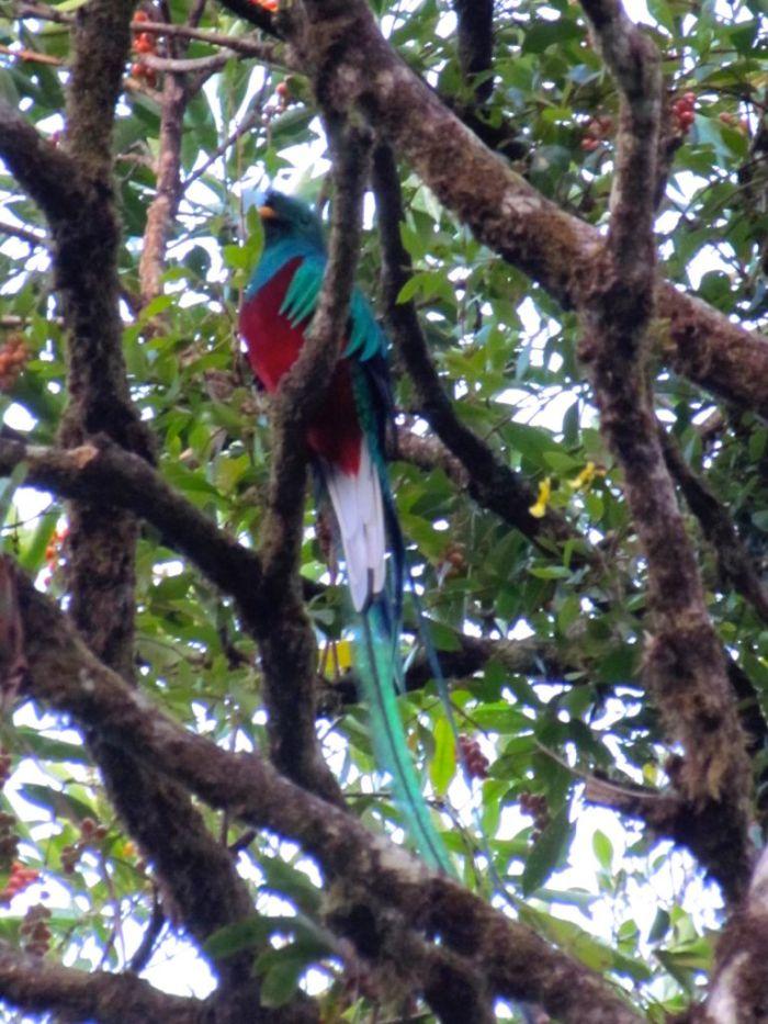 Quitzal