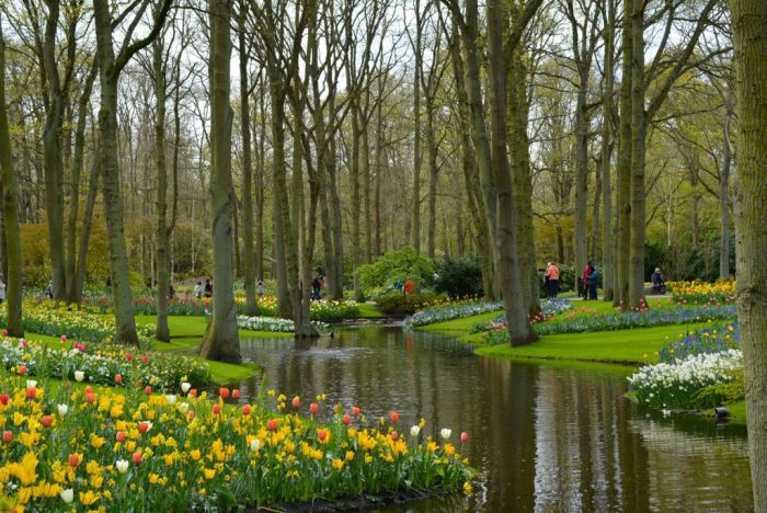 tulips surrounding a pond at the Keukenhof