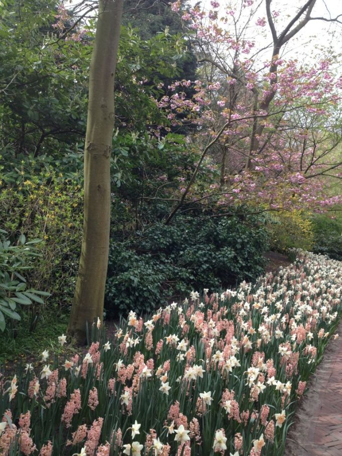 pink and white flowers border at the Keukenhof