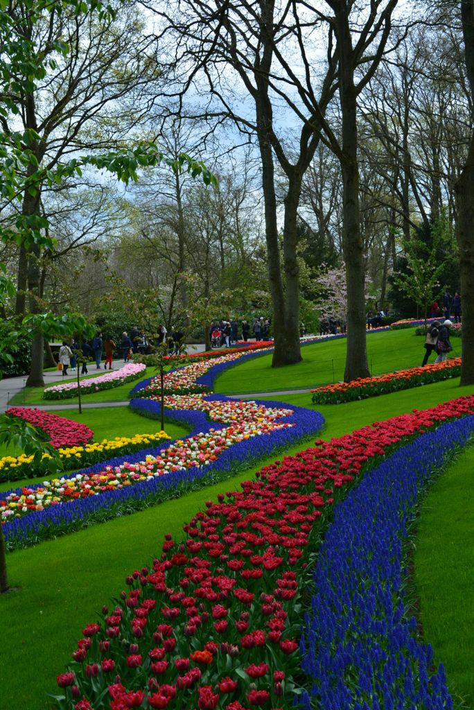 manicured flower beds at the Keukenhof