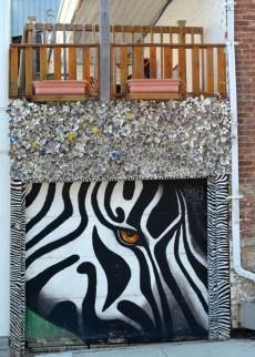 Eye of the Zebra -- Quebec City, Quebec