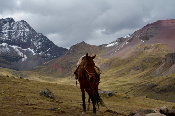Horse in Ausangate, Peruvian Andes, Rainbow Mountain