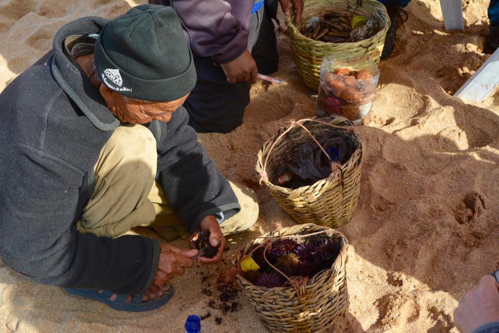 Fishermen preparing Sea Urchins